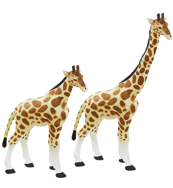 giraffes with different sized necks